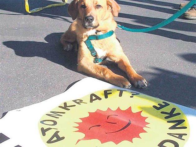 Proti temelínské elektrárně protestoval i tento pes.
