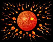Spermie a vajíčko