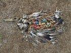 Mrtvý albatros s břichem plným plastů.
