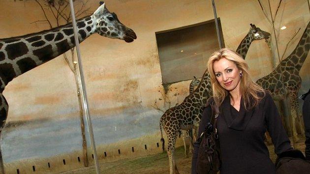 Ladné, dlouhé krky žiraf a ladná kráska Kateřina Brožová. Dohromady jim to sluší...