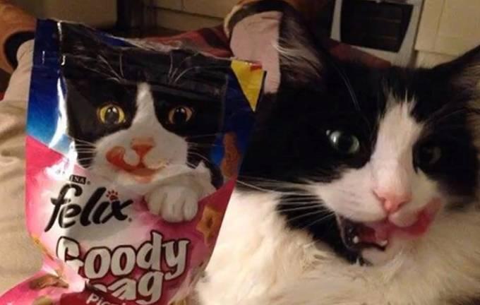 Kočka z reklamy!