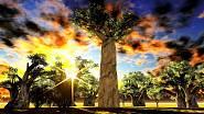 Jedinečné stromy baobaby jsou patrně nejfotografovanější atrakcí Madagaskaru. Díky mohutnému kmeni a malé koruně je každý turista pozná už zdálky.