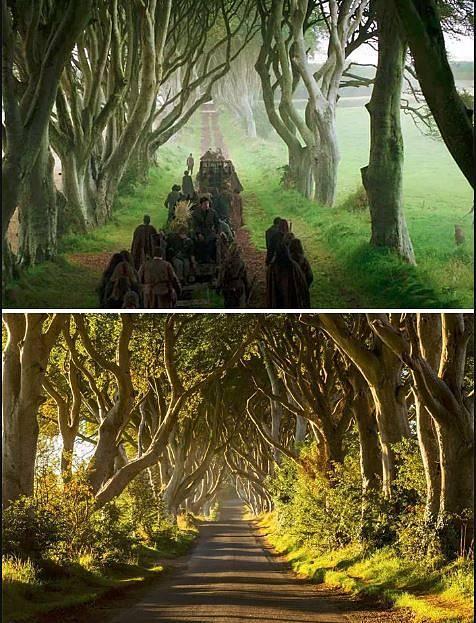 Královská cesta - Buková alej Dark Hedges, Severní Irsko