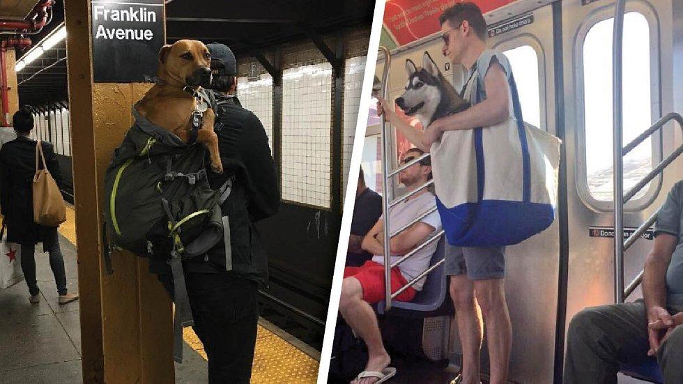 Když musí být pes v tašce, tak to tak musí být. Ještě, že neurčili, jak velká má být.