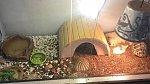 Nezbytnou součástí domu jsou i dvě želvičky.