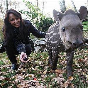Zpěvačka Heidi Janků pokřtila mládě tapíra v ústecké zoo