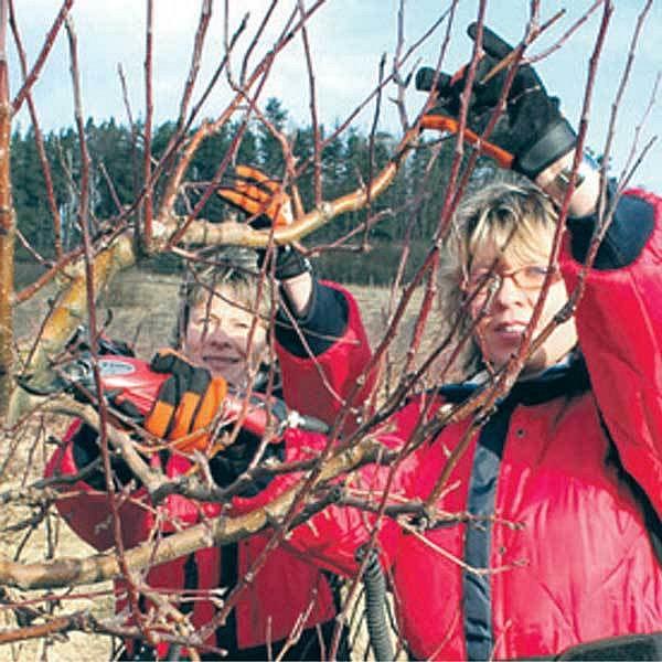 Sadařkám Vladimíře Menclové a Janě Zikmundové projde rukama každoročně na osm tisíc stromků.