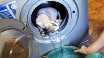 Kočka v pračce