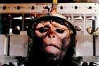 Je možné, aby makak přežil ledovou smrt? Prý ano.