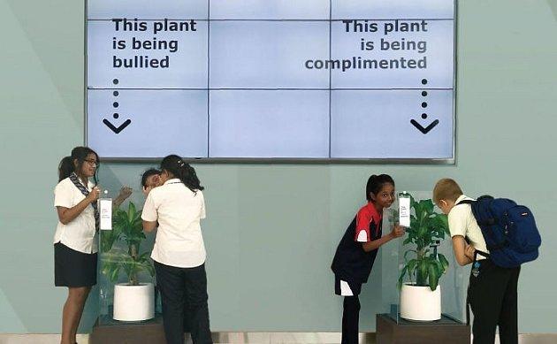 Šikana rostliny