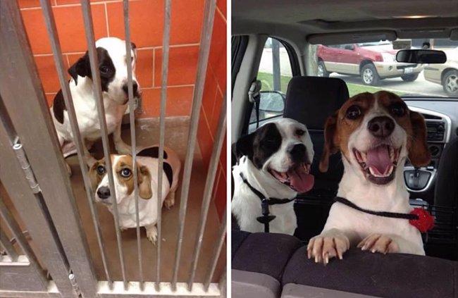 Tito dva byli nerozluční už jako štěňata. Po smrti majitele nesli cestu do útulku hodně těžce, ale byli adoptování společně.