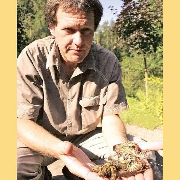 Ochránce přírody Václav Hlaváč ukazuje mrtvé raky říční, které u Světlé nad Sázavou hubí zavlečený račí mor.