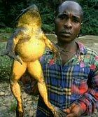 V Africe mají fakt velké žáby.
