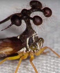 Tohle je podivná mutace skákavé kobylky.