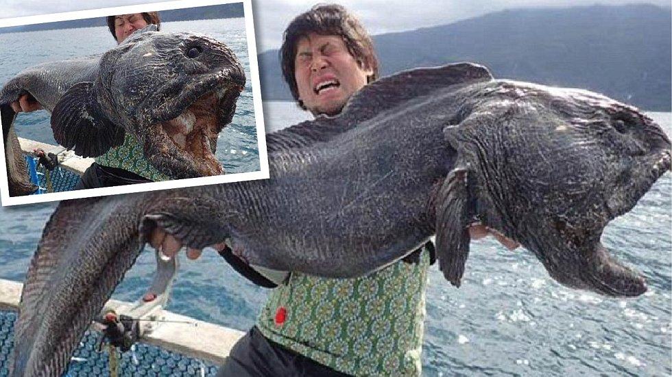 Gigantická ryba nejspíš zmutovala vlivem radiace.