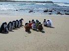 Kdo by odolal svatbě tučňáků?