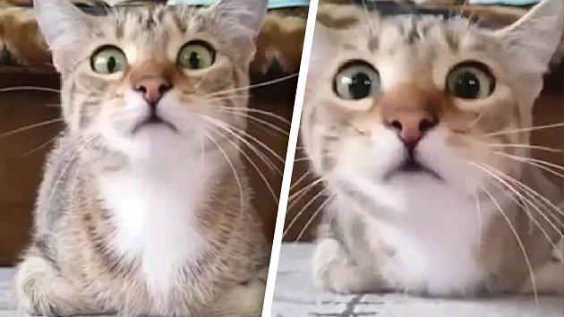 Video pro kočky