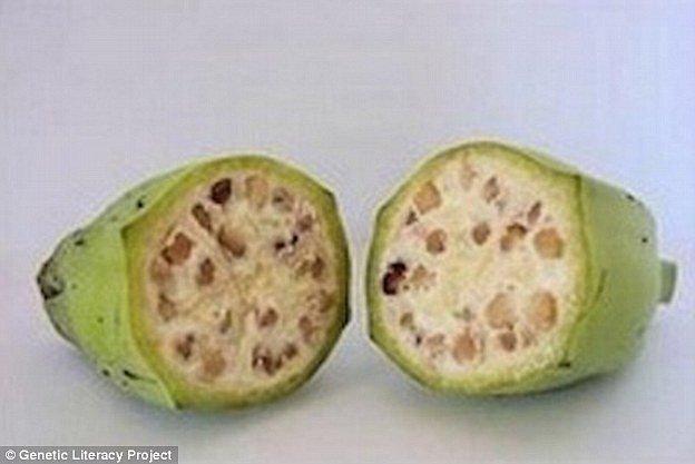 Banán z minulosti