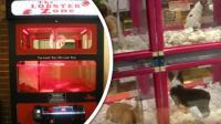 Nejdivnější automaty světa!