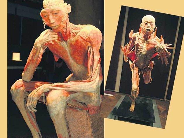 Na těle sedícího muže autor výstavy představuje návštěvníkům hlavně detail lidského mozku (vlevo). Takhle pracuje naše tělo v běhu.