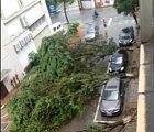 Tady parkují všichni dobře, i stromy