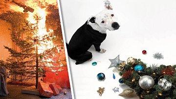Aby Vánoce neskončily podobnou nehodou, vám přeje redakce Šípu.