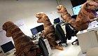 Oddělení paleontologů.