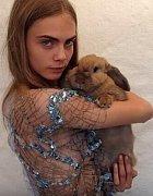 Cecil Delevinge má rozkošného králíka