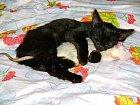 Kočička a krysa