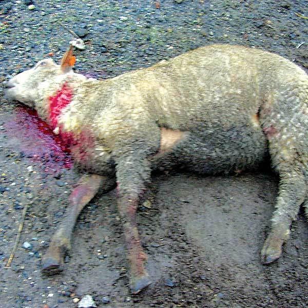 Pohled na zmasakrovaná zvířata byl jen pro otrlé.
