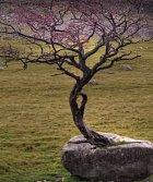 Strom, který roste z kamene.