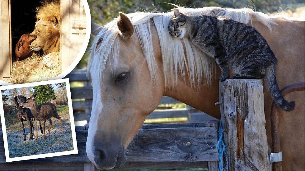 O přátelství rozhoduje srdce, ne to, kdo jsme...
