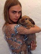 Cara Delevingne má králíka.