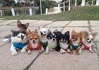 Jsou to opravdu všechno psi?