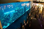 Nákupní centrum Dubai Mall zdobí akvárium…