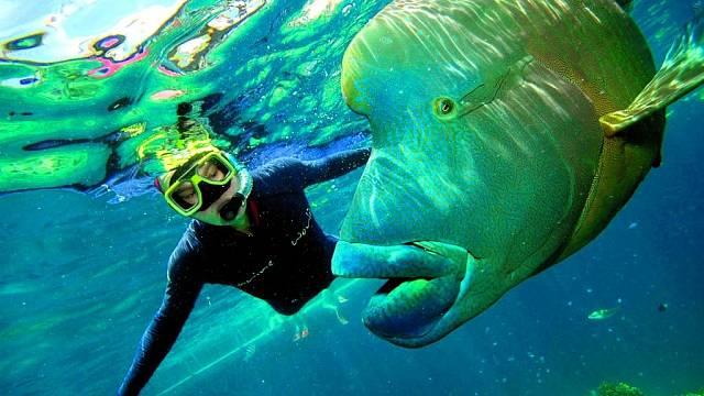 Gigantická ryba, nebo optický klam?