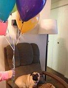Ty balónky jsou děsivé.