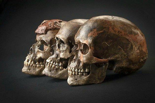 Lebky nalezené vDolních Věstonicích