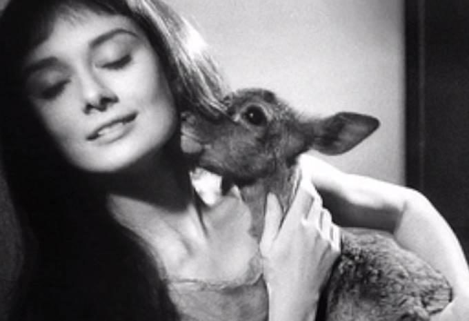 Audrey Hepburn měla srnečku jménem Pippin.