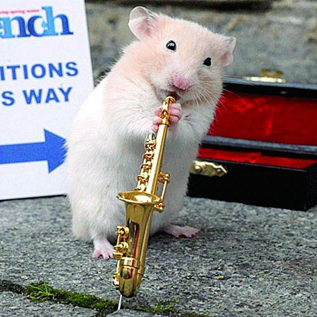 Saxofon je u křečáků nejoblíbenější nástroj.