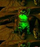 Svítící koťátko