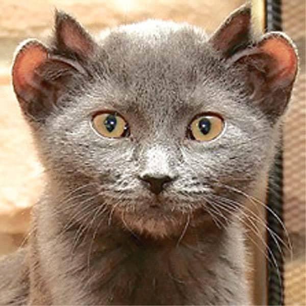 Kočka neboďáblík?