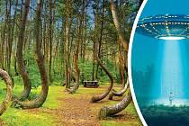 Stromy vlese mají podivně pokroucené kmeny. Příčinu anomálie dosud nikdo nevysvětlil.