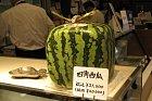 Máte po krk kulatých melounů? Zkuste čtvercový. Jen za 4558 kč!