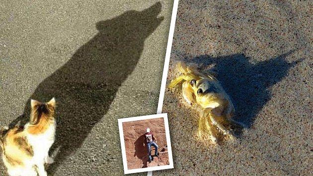 Stín může kočku proměnit ve vkla, ráčka v Batmana či lidské tělo v obličej.