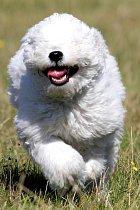 Božská fotka psa běžícího pro míček