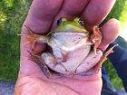 Pětinohá žába