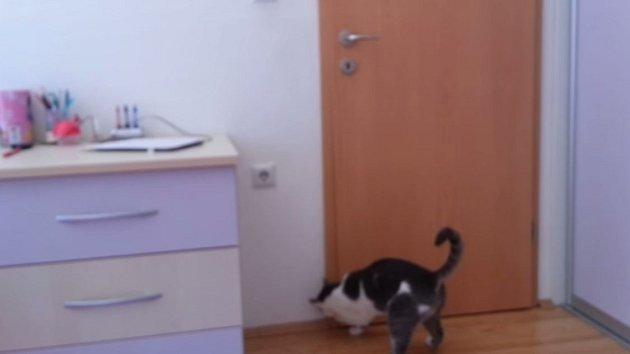 Kočka předvedla neuvěřitelný talent.