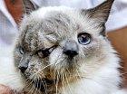 Kočka s dvěma obličeji, veterináři jí dávali půl roku života
