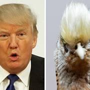 Srovnání Trumpa s ptákem. Podoba není náhodná